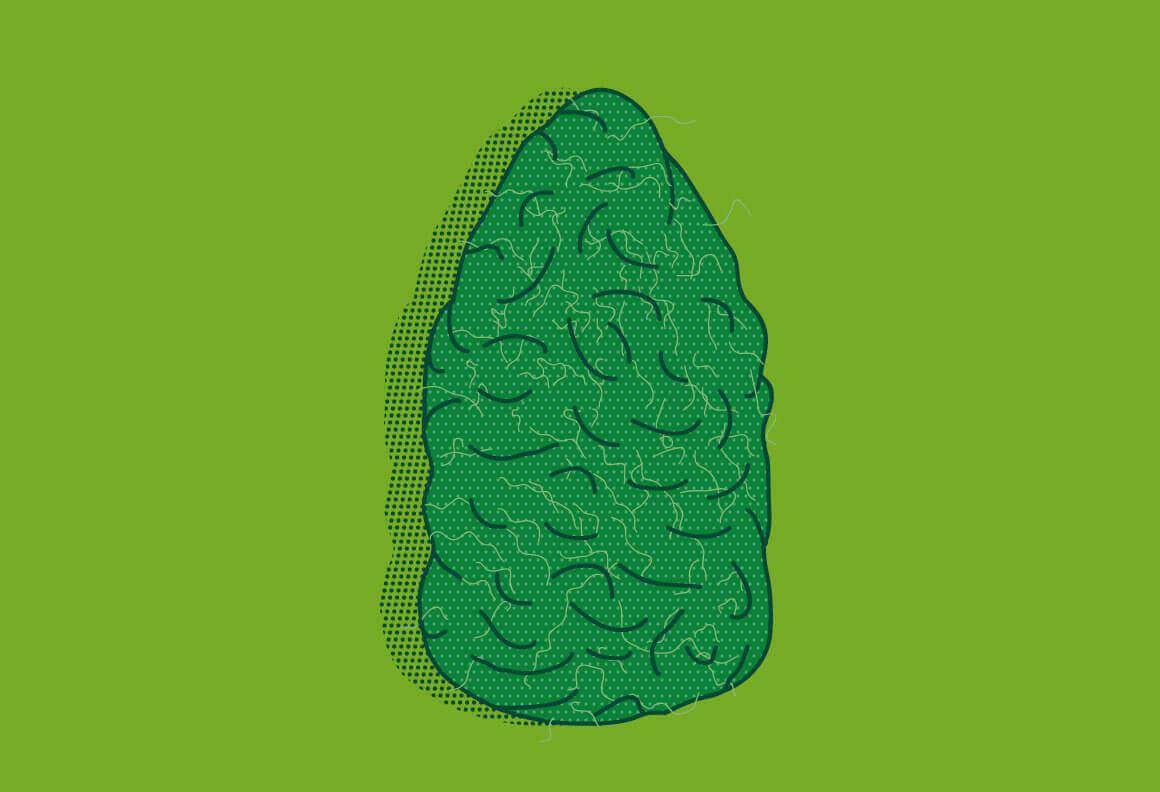 Trocknen von Cannabis