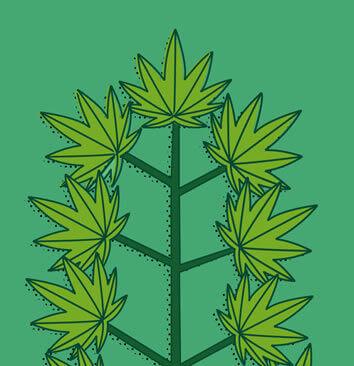 Die Wachstumsphase deiner Pflanzen