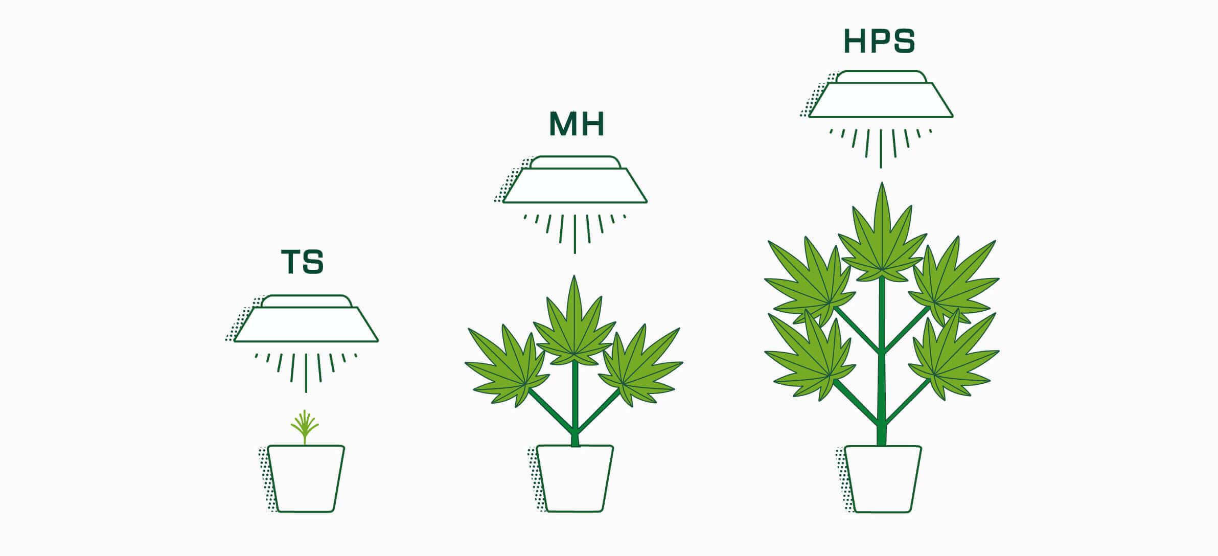 Die besten Pflanzenlampen