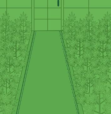 Einen Grow Room einrichten