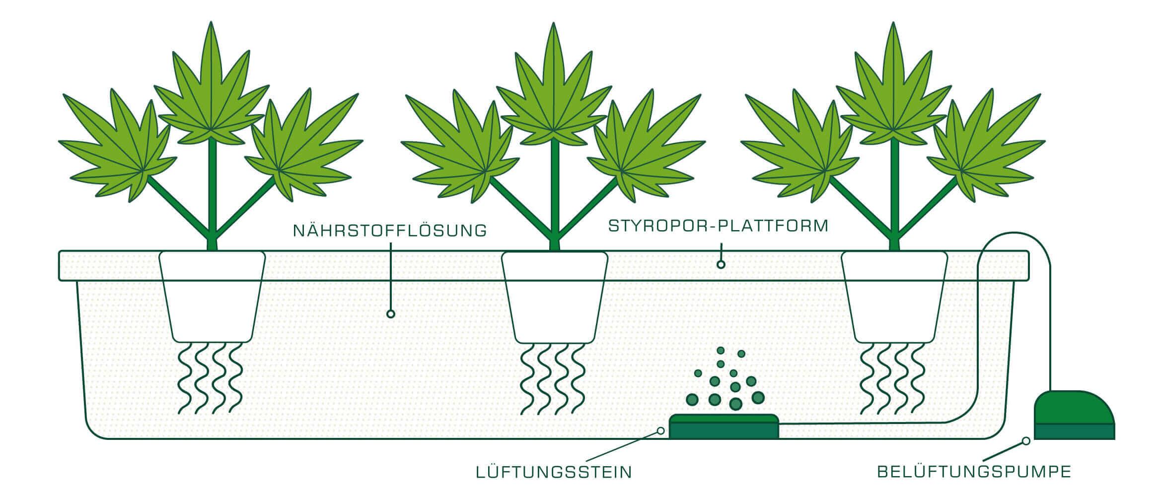 Hydrokultur richtig Bewässern